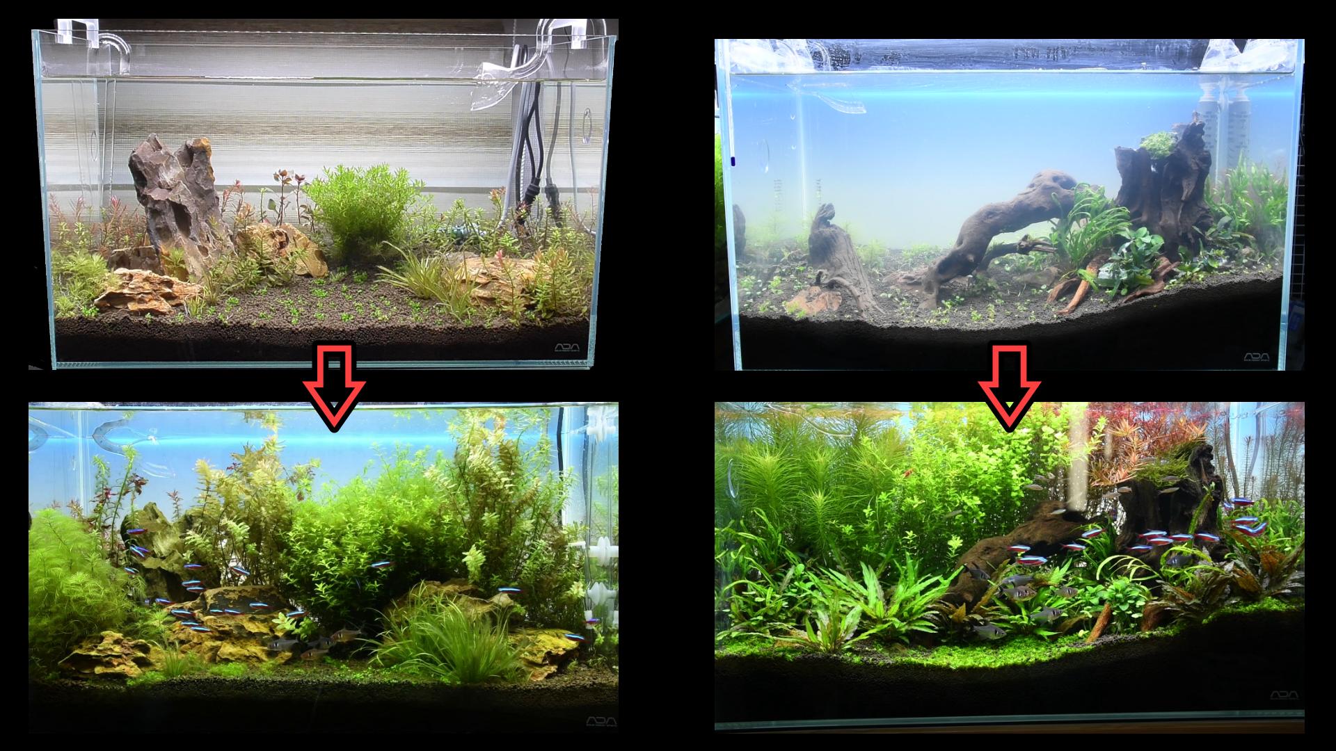新旧60cm水槽:水草の成長速度を比較