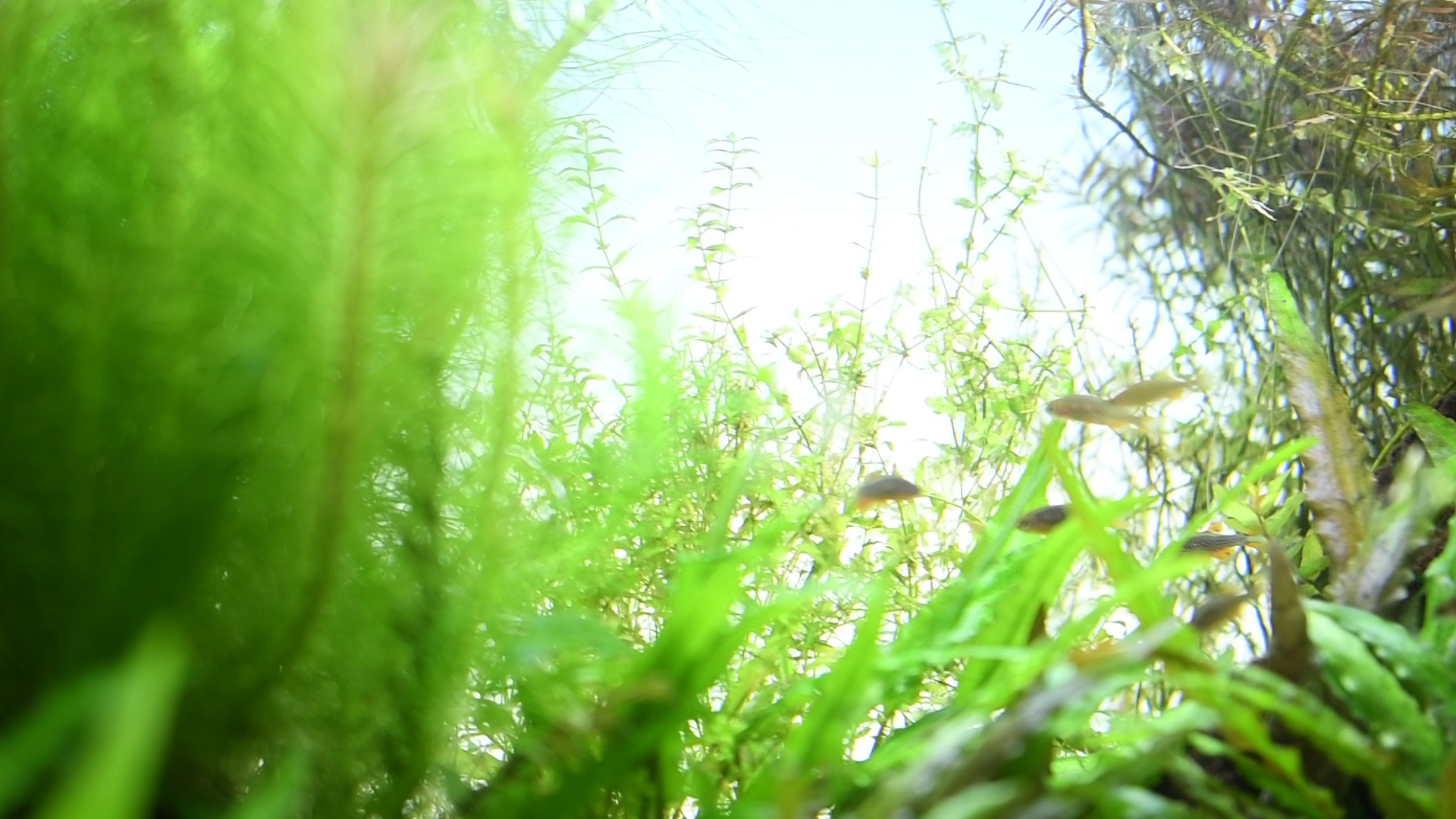 60cmメイン水槽の水草が元気を失った原因