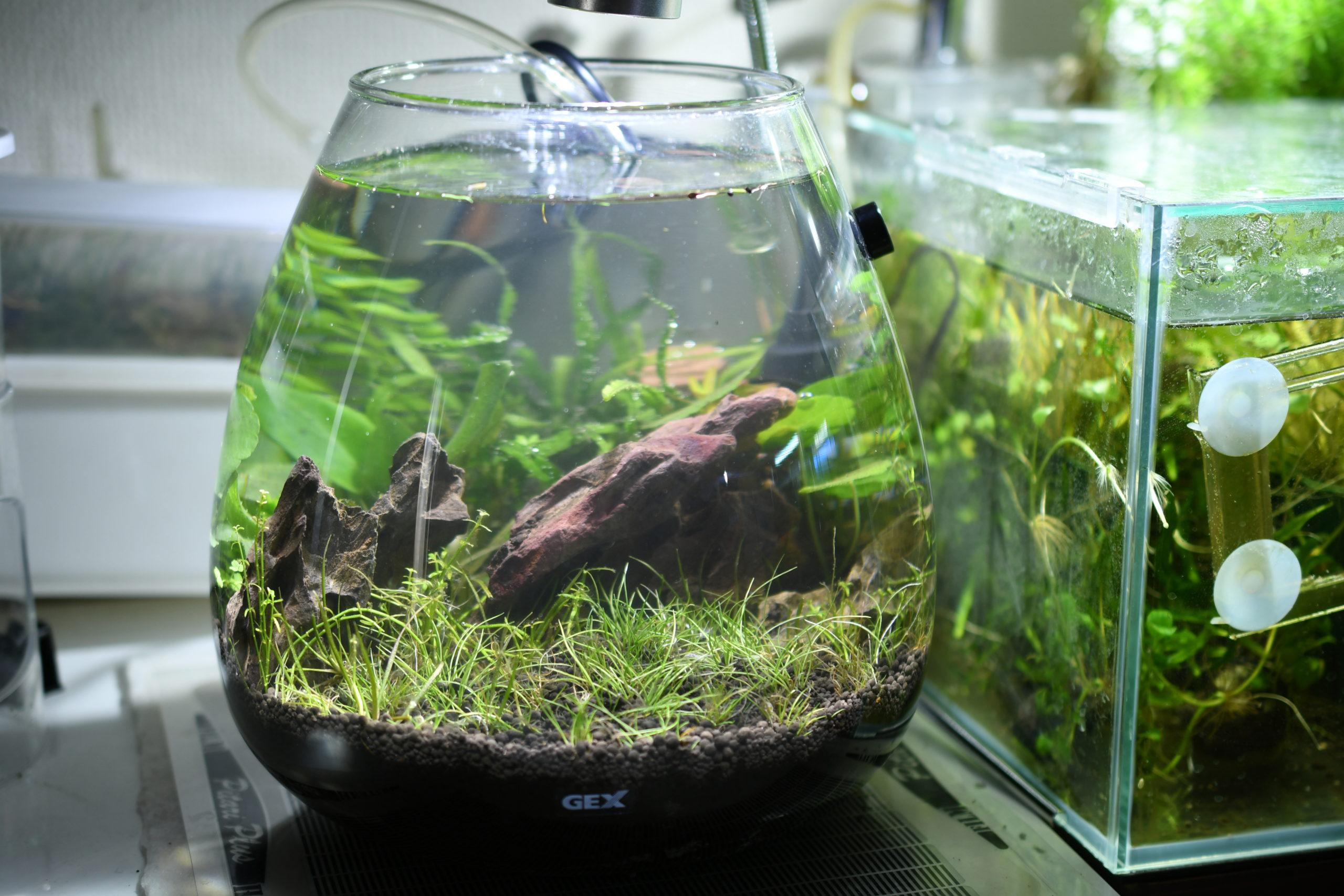 ボトルアクアリウム:最初から水を入れて立上げ!